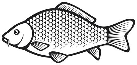 pez carpa: La carpa de pescado (carpa com�n)