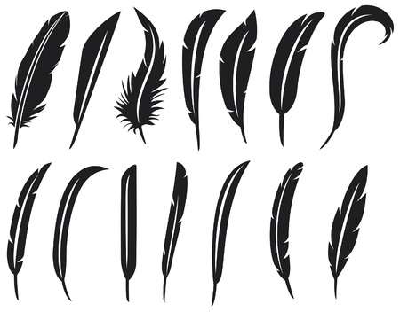 the collection of feathers  feather collection, feather silhouette, feather set