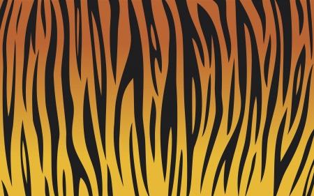 rayas de colores: la piel del tigre (tiger fondo textura abstracta, dise�o despojado tigre, incons�til piel de tigre, tigre fondo de pieles) Vectores