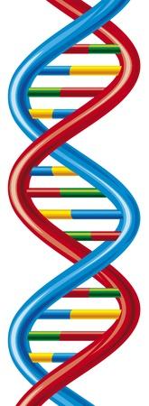 cromosoma: vector esquema de cadena de ADN ácido desoxirribonucleico