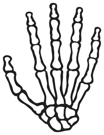 distal: Esqueleto huesos de la mano del vector de la mano humana