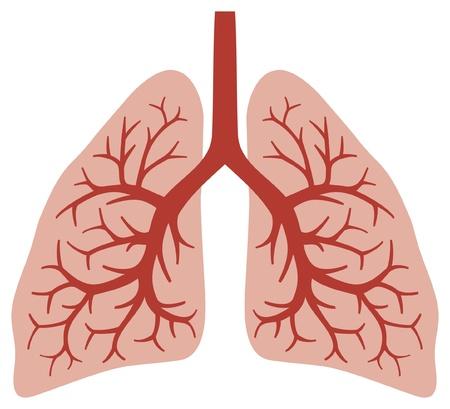 pulmones sistema bronquial humano, órganos humanos, anatomía pulmones Ilustración de vector