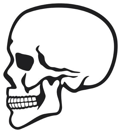 human skull profile  skull profile, side skull  Vector