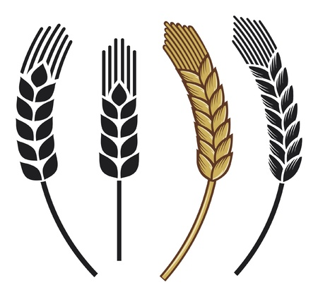 rice plant: wheat ear icon set