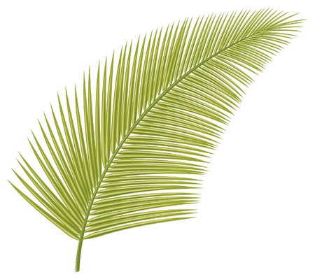 palm leaf  leaf of palm tree  Vector