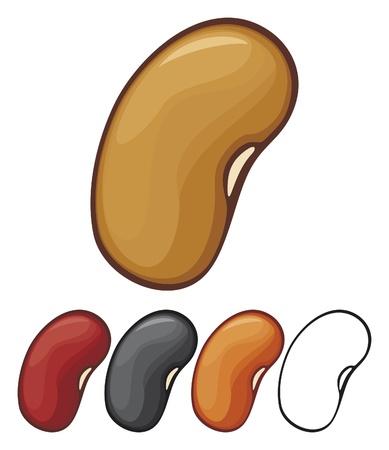 Beans Vector