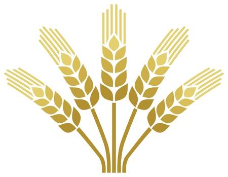 ječmen: pšeničné klasy pšenice ikona designu