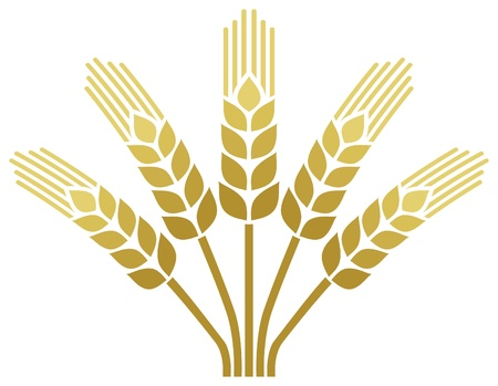 crop  stalks: wheat ear icon  wheat design  Illustration