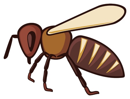 bee icon  honey bee  Vector