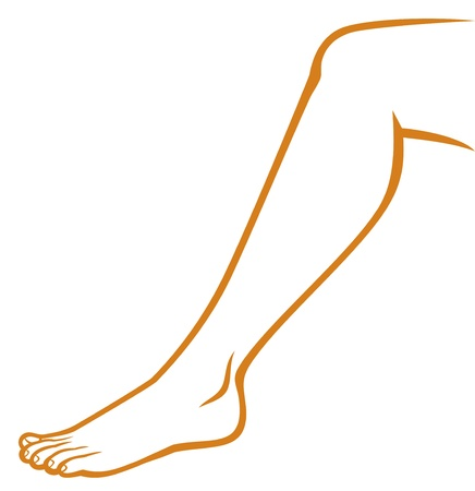 woman feet  woman leg  Stock Vector - 18660584