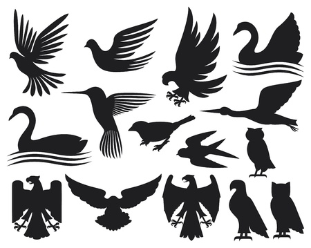 cisnes: conjunto de las aves siluetas conjunto pájaros, colibrí, la paloma, el gorrión, pequeño pájaro, búho, cisne, cigüeña, águila, halcón