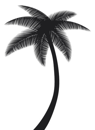 trees with thorns: palm tree silhouette