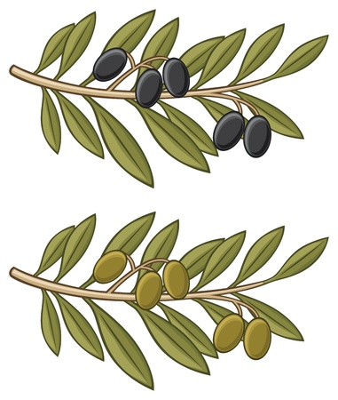 olive tree isolated: olive branch