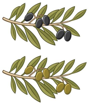rama de olivo: rama de olivo Vectores