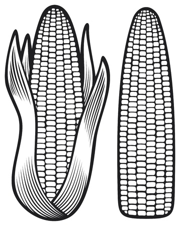 husk: corn  corncob, corncob with leaves  Illustration