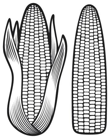 mazorca de maiz: ma�z mazorca, mazorca de ma�z con hojas Vectores