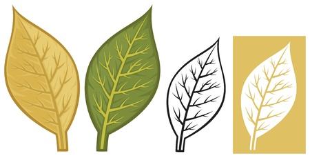 tobacco leaves Illustration