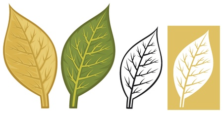 havana cuba: tobacco leaves Illustration