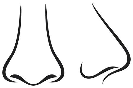 nasen: Nase Illustration