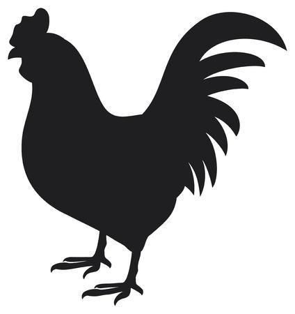 animal cock: gallo gallo silhouette