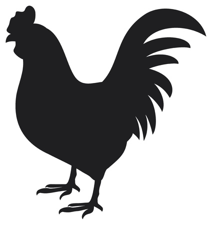 novios silueta: gallo gallo silueta