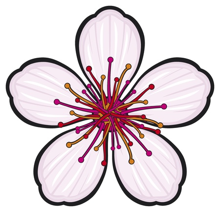 Cherry blossom flower Stock Vector - 20591686