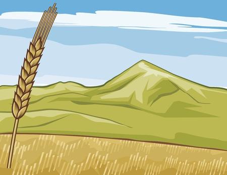 golden grain-field  wheat Stock Vector - 21061202