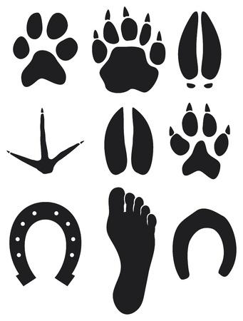 silhouette lapin: empreintes de pattes
