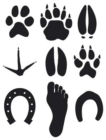 cartoon hare: paw prints