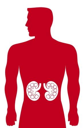 bowel: reni evidenziata la sagoma di un uomo