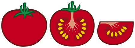 vegetable gardening: tomato