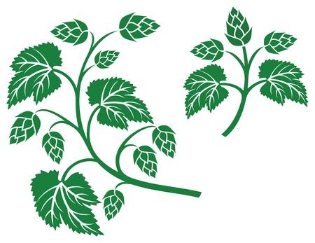 hop plant: hops leaf design