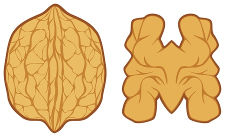 walnut: walnut
