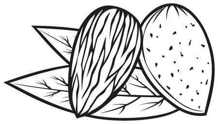 ядра: миндаль с листьями миндального ореха