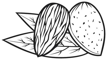 amande: amande avec des feuilles noix d'amande