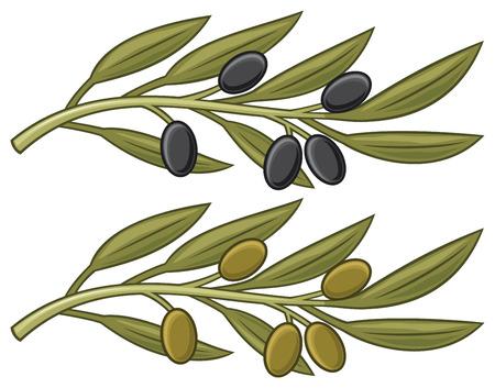 rama de olivo: la rama de olivo de hoja de olivo Vectores