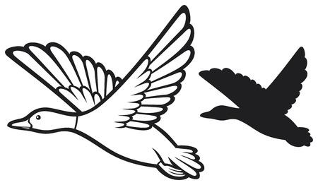 真鴨フライングダック飛行の鳥鴨  イラスト・ベクター素材