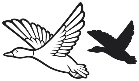 mallard duck flying bird duck, flying duck