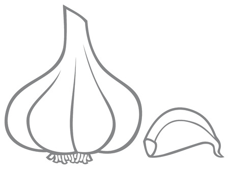 garlic clove: garlic Illustration