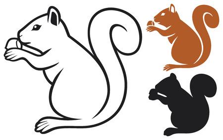 squirrel with hazelnut  squirrel eating a hazelnut  Vector
