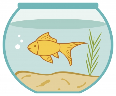 gold fish bowl: goldfish in a bowl  bowl and fish, golden fish in aquarium  Illustration