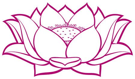 Lotusbloem Stockfoto - 24875208
