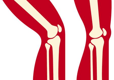 knee anatomy  human knee joint  Illustration