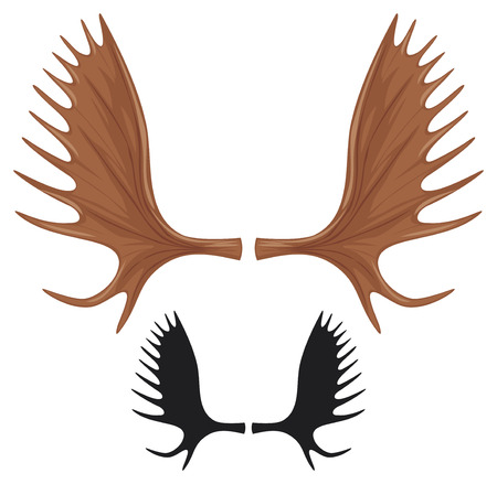 large skull: horns of moose  moose antlers  Illustration