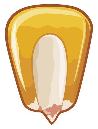 graankorrel (kernel maïs, zaaigranen)