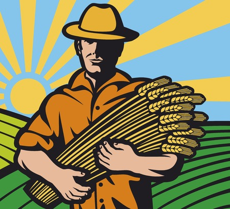to gather: farmer worker holding a wheat (farmer and wheat ears, farmer with wheat in hands)