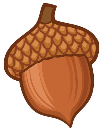 acorn illustration Vectores