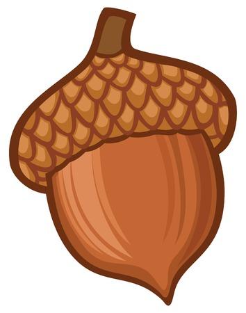 roble arbol: ilustración de la bellota