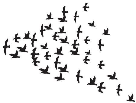 flight: a flock of flying birds silhouette of the birds in flight Illustration
