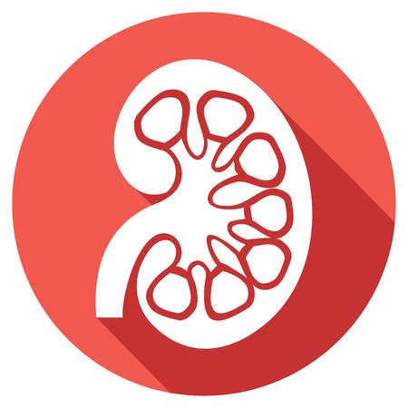ひと腎臓医学解剖学フラット アイコン